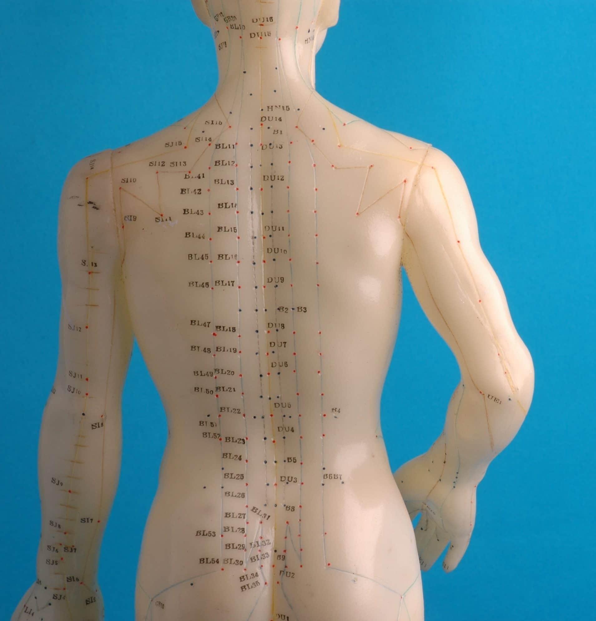 Acupuncture Back Diagram